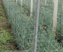 HORTOMALLAS carnation and netting with ree bar supports